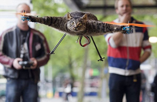 cat-copter-1