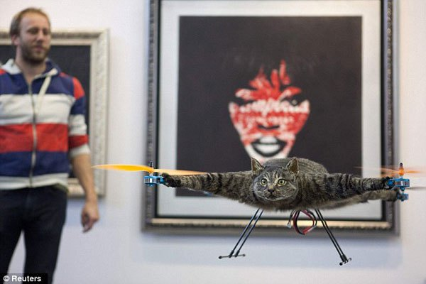 cat-copter-3