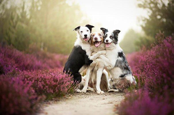 dog-best-friends-17__605