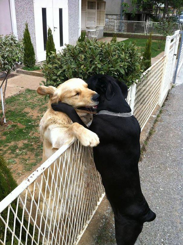 tiernos amigos perrunos