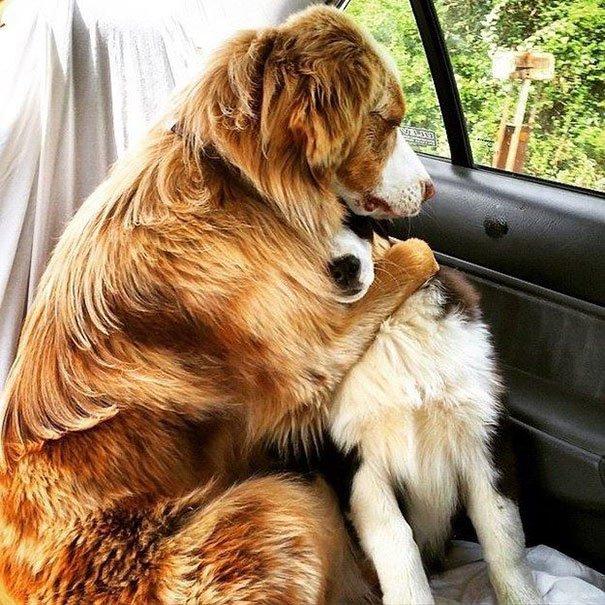 dog-best-friends-2__605