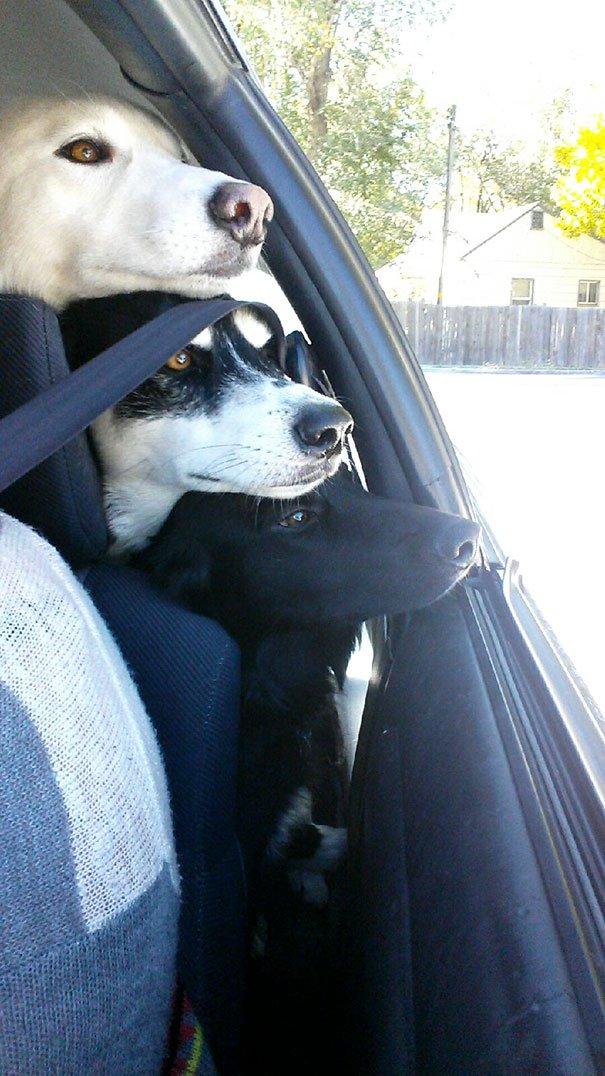 dog-best-friends-8__605