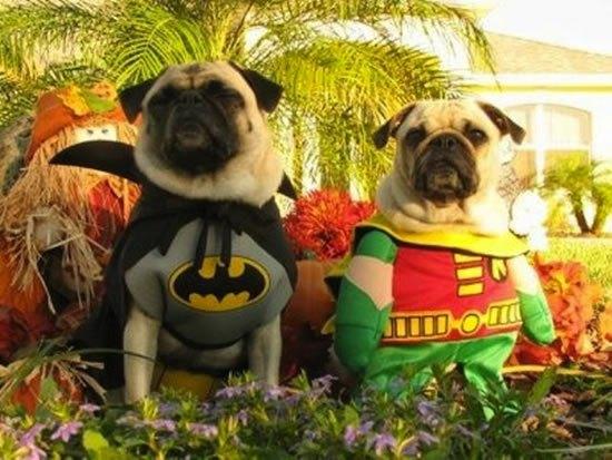 No Podrás Creer Estos 16 Perros Lindos y Adorables Disfraza