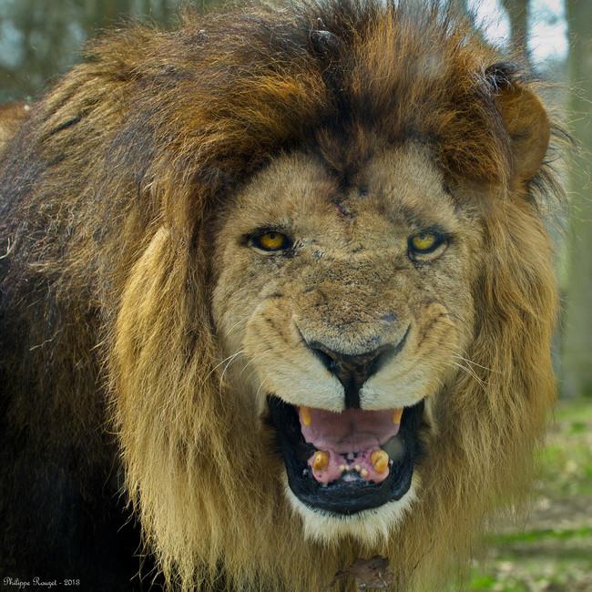 lionwatch