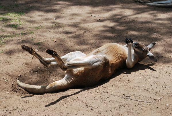 funny_lazy_animals-10
