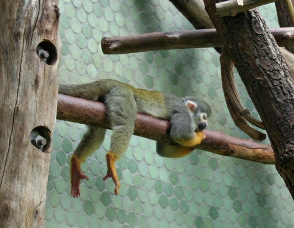 funny_lazy_animals-11